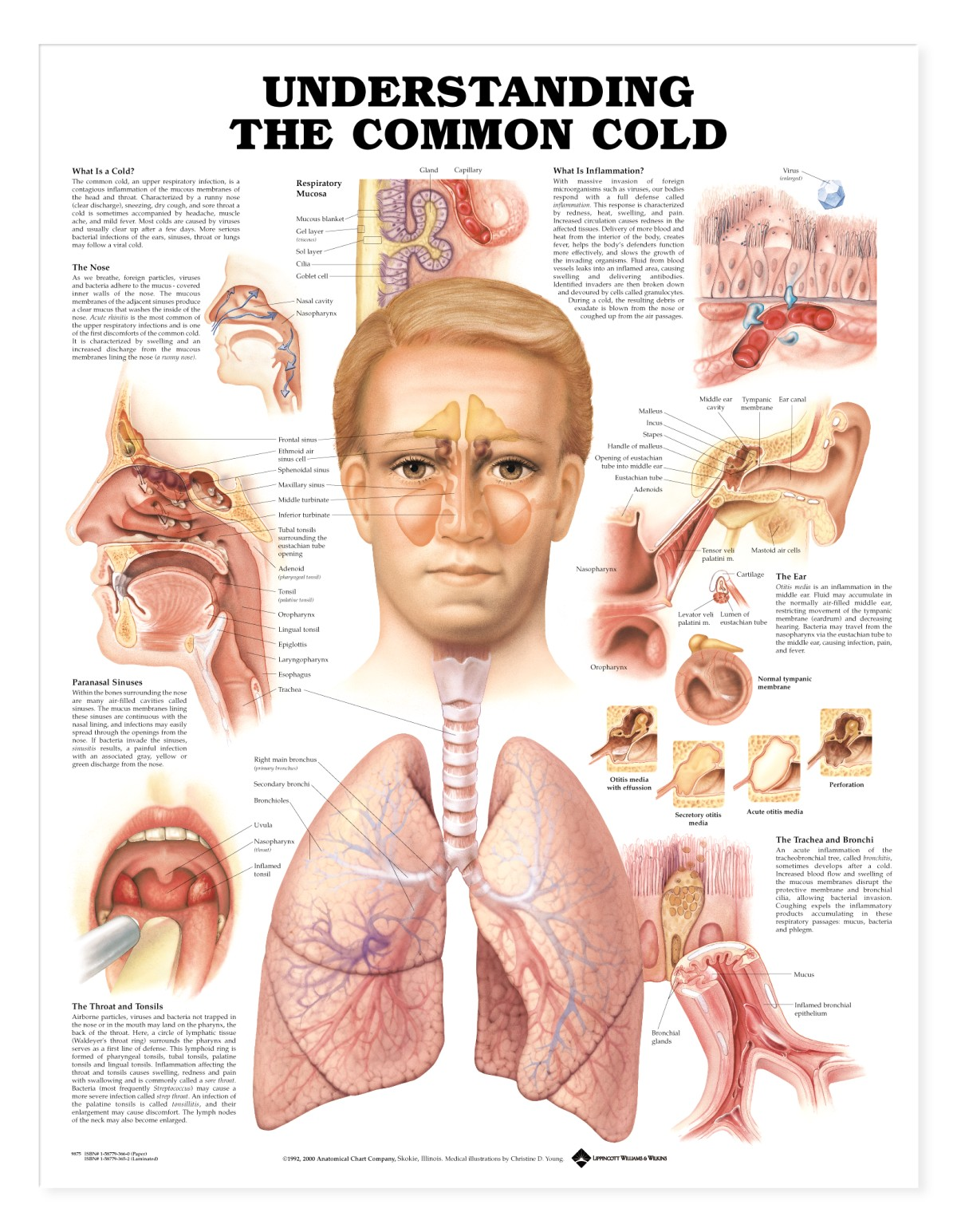 The Common Cold